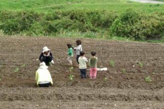 いなべのさとやま自主保育の皆さんと農業体験