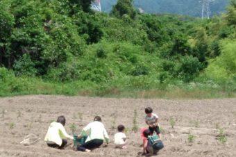 いなべの耕作放棄地で農業