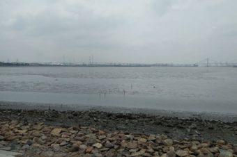 ラムサール条約登録湿地の藤前干潟にやって来ました。