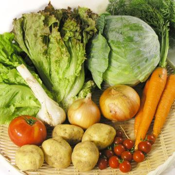 今年最後のおまかせ野菜セット定期便のお知らせ