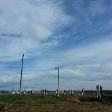 保育園の子どもたちがサツマイモの収穫