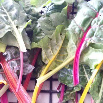 カラフルでおしゃれな野菜、スイスチャード
