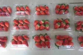 本日2時から配達再開します。サプライズでイチゴがあるかも!?