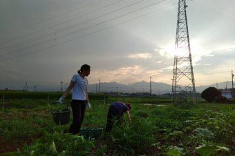 夜の農業体験